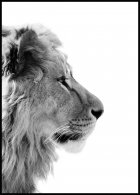 Lion Profile Poster