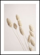 Dried Grass Poster