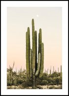 Cactus at Sunset Poster