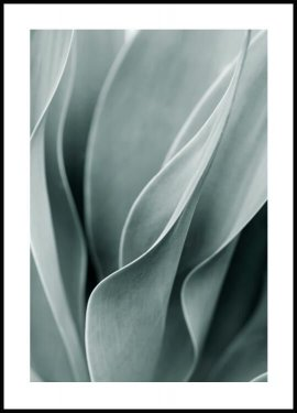 Agave leaves Poster