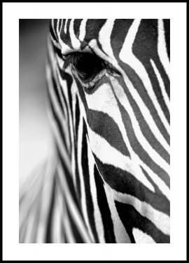 Zebra Stripes Poster