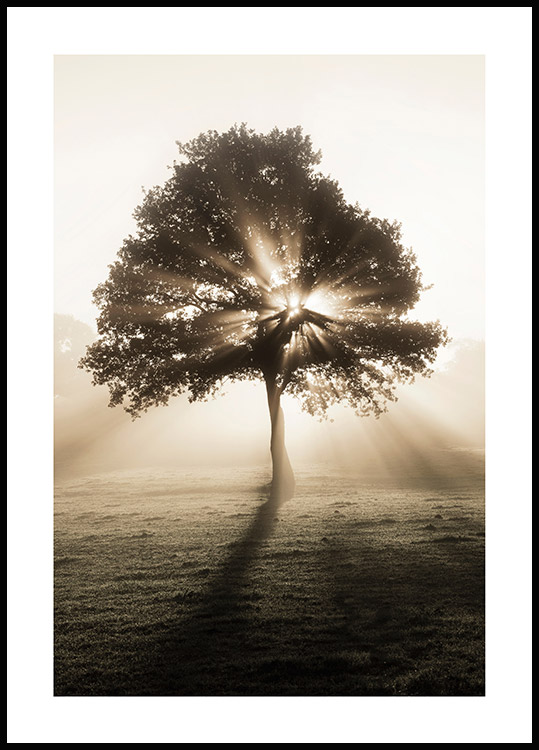 Sunrise Tree Poster