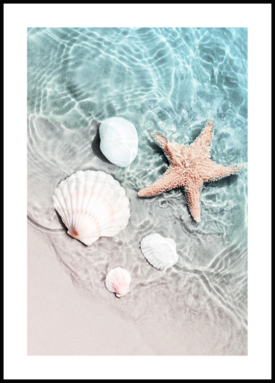 Starfish and Seashell Poster