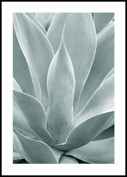 Agave Cactus Poster Posterstore Com